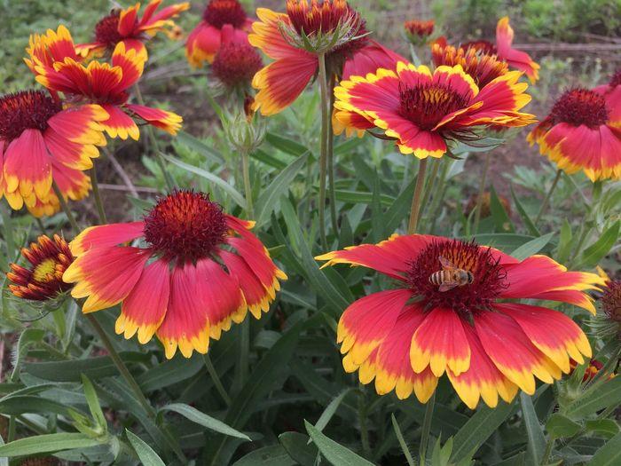太阳花,给人阳光的心情