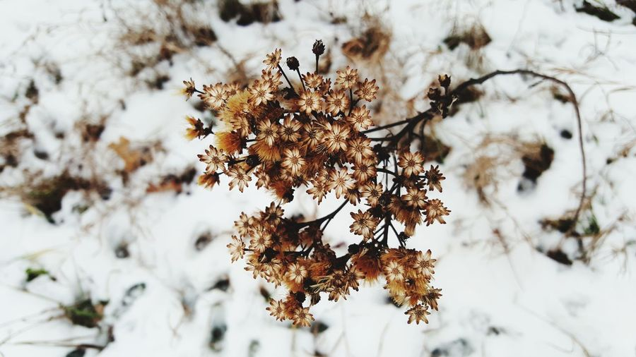 EyeEm Selects Forest Wilderness Snow Nature Tree Branch Winter Landscape No People Outdoors Day Cold Temperature Beauty In Nature Beauty Indiana Fields Close-up Nature Flowers
