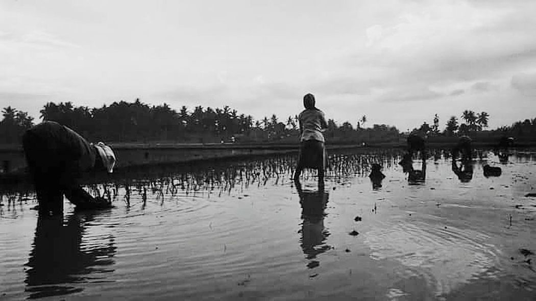 I see,i shot,and i upload Portrait Streetphotography Street Humaninterestphotography Humaninterest Humaninterestindonesia Humaninterestid Streetphoto_bw Reflection Agriculture Water Farmer Only Men Adult People Sky Adults Only Men Rice Paddy Outdoors Domestic Animals Nature Day One Person Mammal