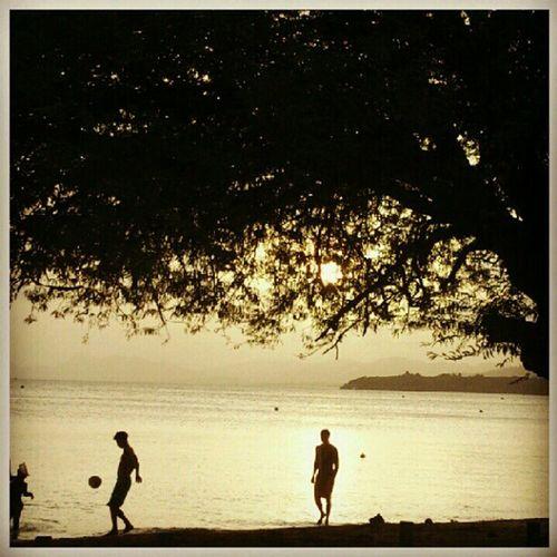 Beach Trees Shades