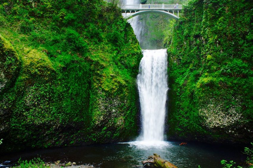 Adventure Club Green Green Color Multnomah Falls  Adventure Beauty In Nature Bridge Day Forest Freshness Green Color Greenery Motion Nature No People Outdoors River Scenics Tree Water Waterfall An Eye For Travel