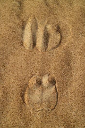 Sand Land Camel