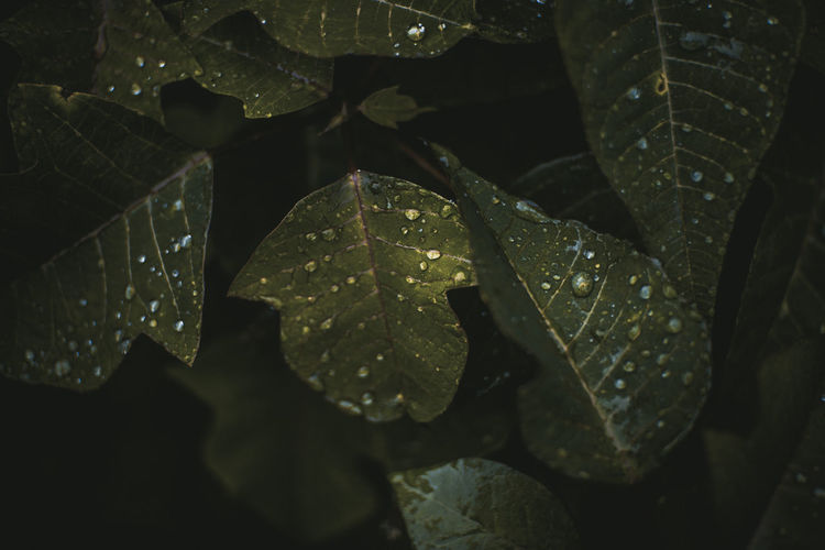 Nature Nature Photography Beauty In Nature Close-up Day Drop Nature Nature_collection Naturelovers No People Outdoors Pattern Photo Photography Photooftheday Plant Plant Part Rain Rainy Season Water
