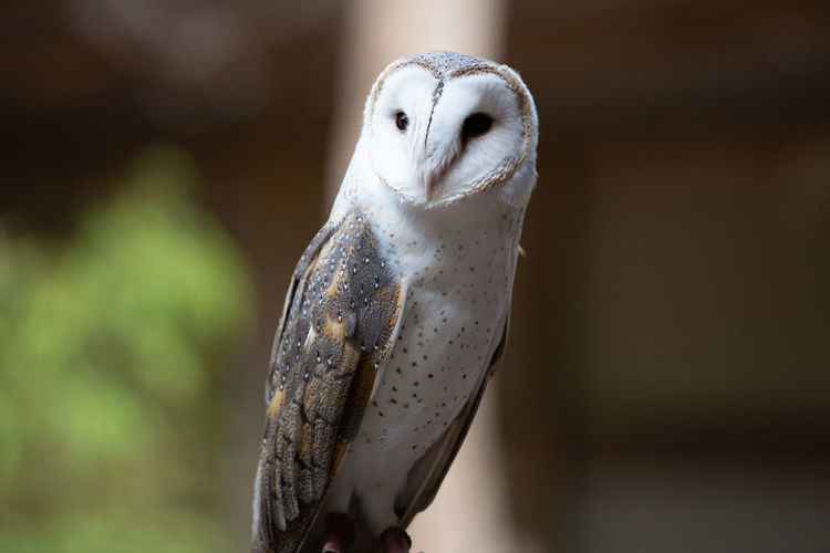 Animal Animal Themes One Animal Bird Focus On Foreground Animal Wildlife Vertebrate Animals In The Wild Close-up No People Owl Bird Of Prey Day Perching Outdoors White Color Animal Body Part Nature Copy Space Owls