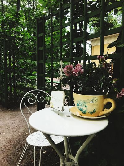 Plant Chair Seat Table Tree No People Absence Front Or Back Yard Building Architecture Nature Furniture Food Built Structure Growth Outdoors Empty Day Food And Drink Arrangement
