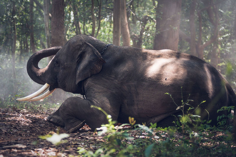elephant Elephant Elephant Art Elephant Calf Elephant Mountain Elephant Nature Park Elephant Picture Elephant Seals Elephant Thailand Elephant Trunk Elephantlove Elephants
