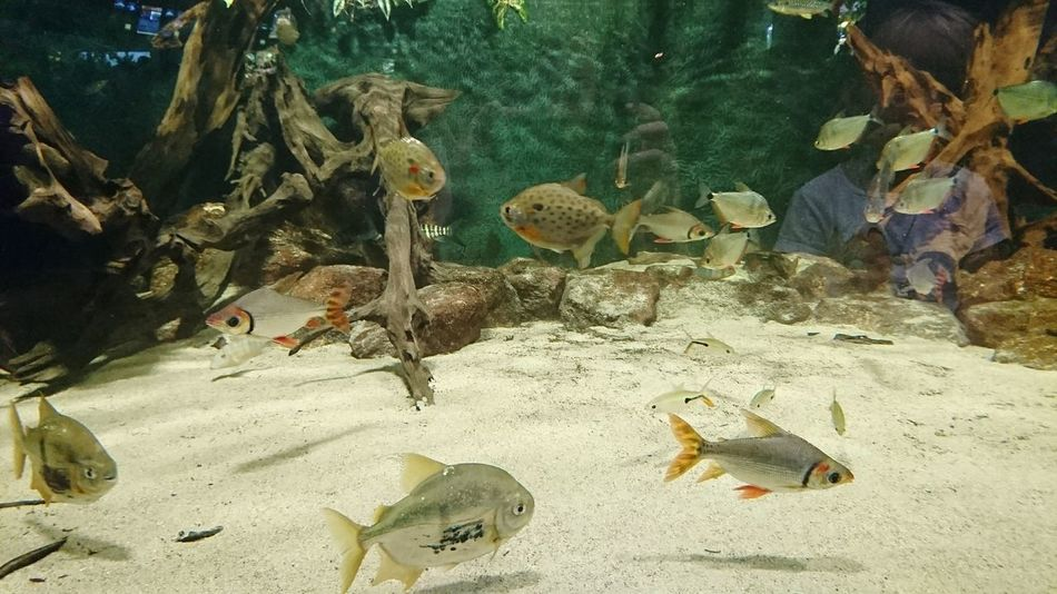 Underwater Animal Themes UnderSea Sea Life Fish Nature Sand Large Group Of Animals Water Zoo Zoo Leipzig Ausflug  Have A Nice Day♥ Family Time Swimming