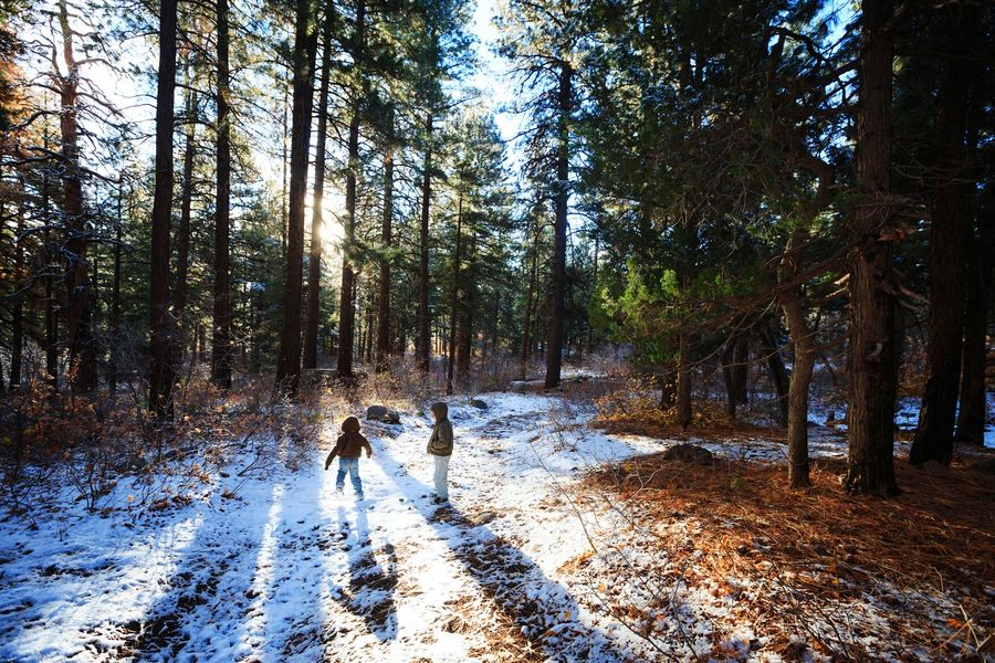 Snow delightful Forest Landscape Children Children Playing In The Snow Scenics Beauty In Nature Winter Wintertime Winter Wonderland Winter Trees Winterscapes Little Boys Kids Being Kids Kids At Play Tree Trunk Nature Tree Outdoors Cold Cold Weather Natgeolandscape Betterlandscapes People Utah