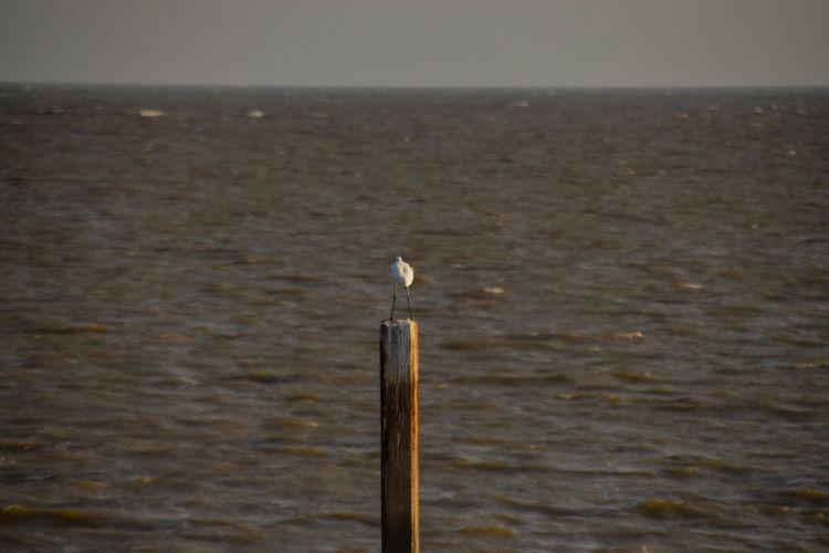 Bird Perching Water Animal Themes Close-up Hawk - Bird Falcon - Bird Bird Of Prey