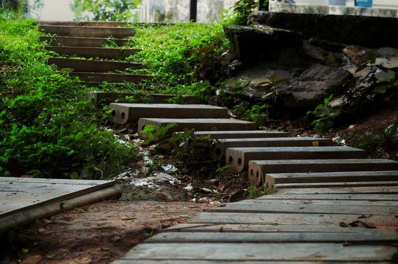 Empty bench by footpath