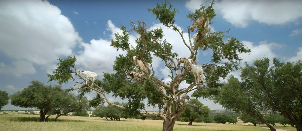 Tree Land Day