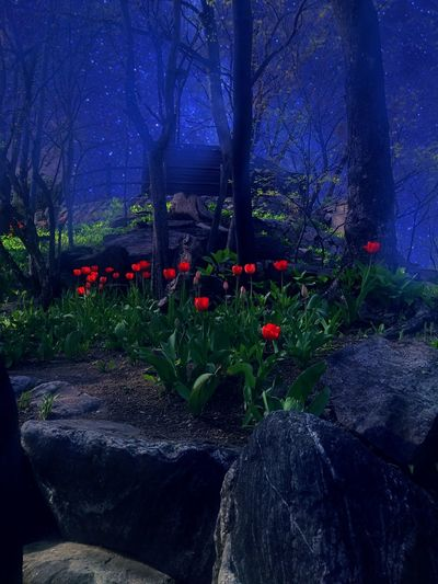 Night Nature Flower Growth Outdoors Tree Beauty In Nature No People Sky