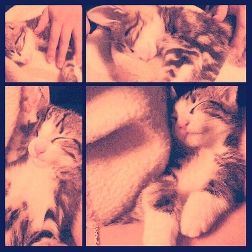 Dumaniminbebeleri Kabartey Sebastian Kittens kitty kittycat cat catstagram kedi kedicik baby