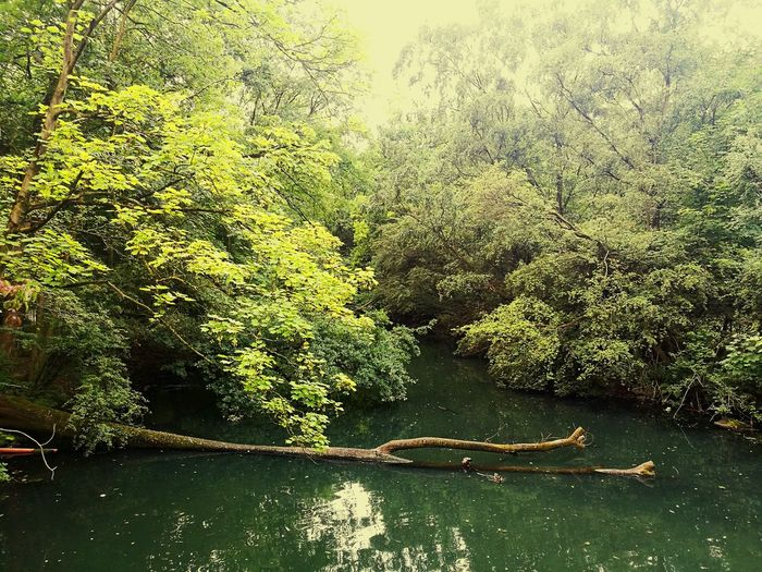 Nature Teich Magic Magical Magic Moments Water Full Frame Backgrounds Lake Growing The Great Outdoors - 2018 EyeEm Awards