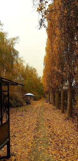 Осень 🍁🍂 Tree