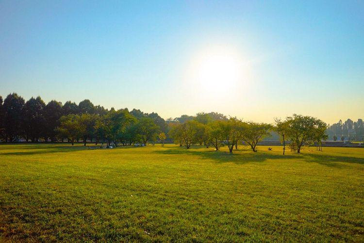 Tree Grass Sun