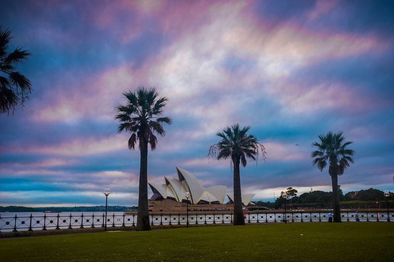 Palm trees against dramatic sky