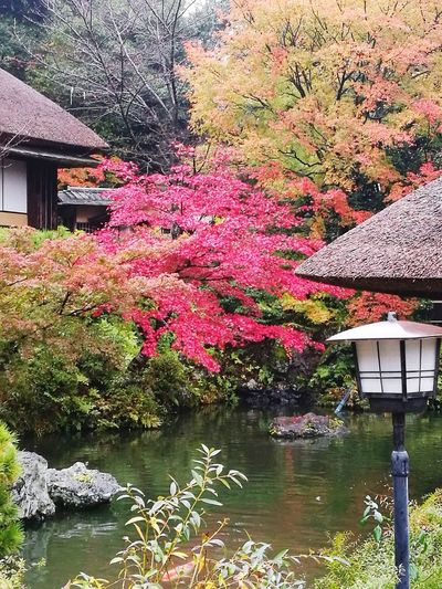 The winter you're not gonna see Built Structure Building Exterior Outdoors Architecture Water Nature Day Beauty In Nature Tree No People Growth Scenics Momiji EyeEmNewHere