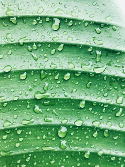 Full Frame Shot Of Raindrops On Leaf
