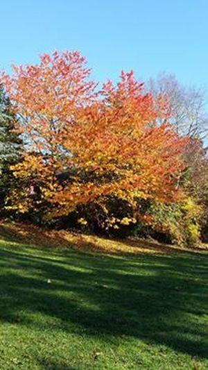 Autumn Autumn Colors Eyeem Made In Gernany 🇩🇪Photos Club📷 Hesse Nature Outdoors Still Life Tree First Eyeem Photo