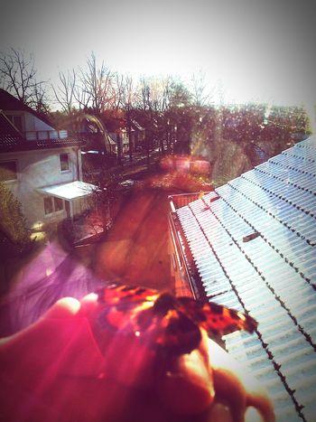 Mynewpet Butterfly ❤ Sunny Winter Day Haveaniceday Hi World ! Smokeweedeveryday Behappy:)