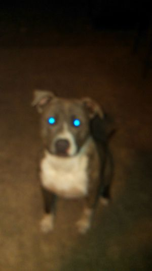 #My Lil Puppy