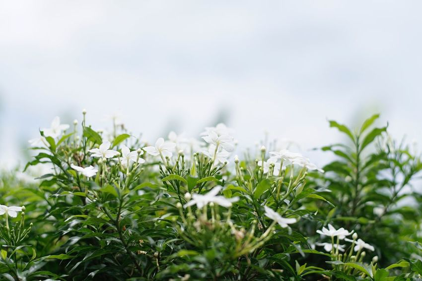 Nature Growth Plant Outdoors Day No People Beauty In Nature Flower Close-up Fragility Freshness Sky