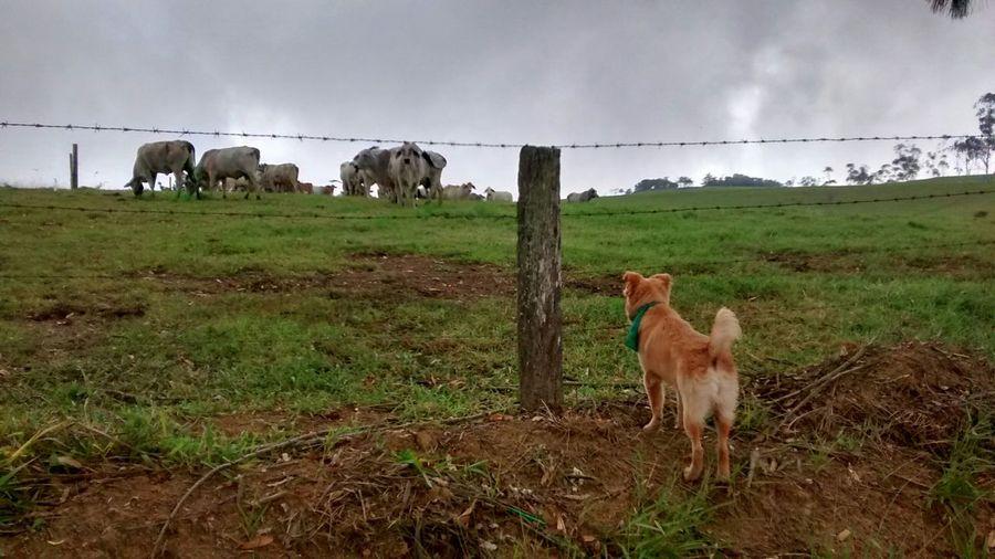 Santander-Colombia Dogslife Landscape_photography