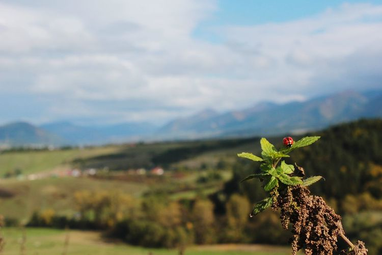 Plants growing on mountain