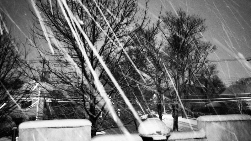 Queens NYC Snow Beauty In Nature City Life NYC City Weather Queens Nyc Winter NYC Photography NYC Street Photography Trees Tree Bare Tree Branch Sky Cold Temperature Snowcapped Winter Deep Snow Snowfall Weather Condition Snow Covered