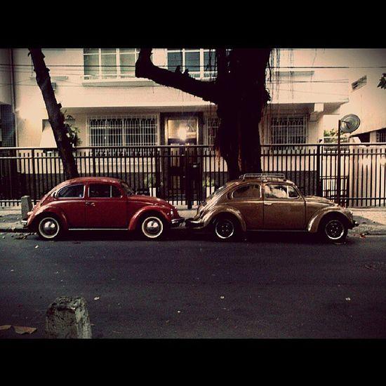 Fuscas Vwdream Automobile Vintage Beetlehunter Volkswagen Beetle Fusca Oldcars Vintage Cars Volkswagens Car