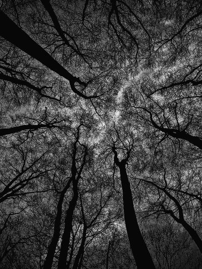 Tree Bare Tree Nature Low Angle View Silhouette Beauty In Nature Sky Outdoors Treetop tree veins 🍂