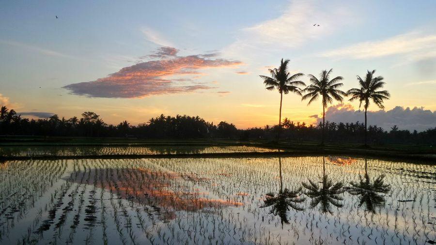 So Pure Bali Bali Sunrise Ubud Jeanmart Joseph Jeanmart Verybalitrip The Great Outdoors - 2016 EyeEm Awards