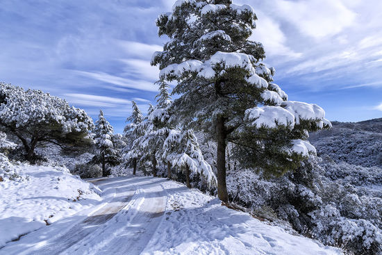 Parc Natural de Sant Llorenç del Munt #nieve Snow Winter Mountain Forest Pine Tree Pinaceae Snowcapped Mountain Fir Tree Rocky Mountains Tranquil Scene Mountain Range Physical Geography Mountain Road