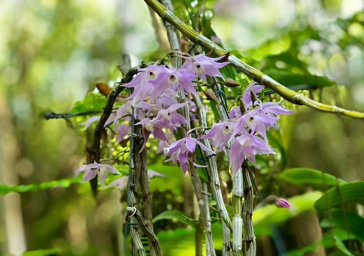 Purple orchids in garden day light Plant Flowering Plant Flower Beauty In Nature Focus On Foreground Growth Close-up Fragility Purple Freshness Nature Vulnerability  Flower Head Day No People Wet Petal Inflorescence Outdoors
