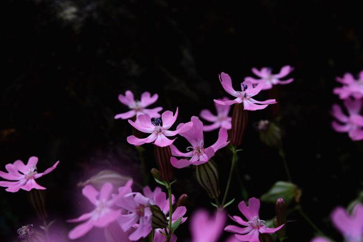 Flowerporn Flowers EyeEm Nature Lover EyeEm Best Edits