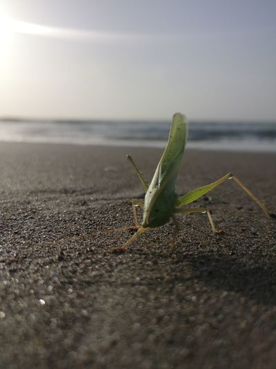 Green Insect Sand Beach Sea Water Close-up Sky Butterfly - Insect
