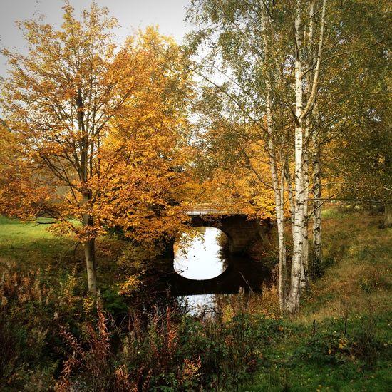 Autumn Autumn Colors Autumn Leaves Walking Around