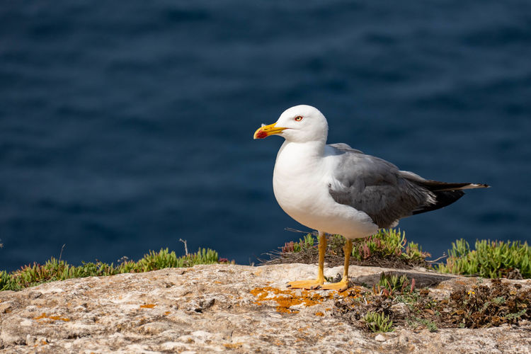 Close-up of seagull perching on a land