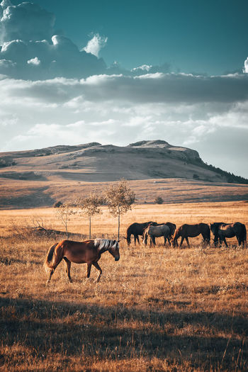 Horses on field against cloudy sky