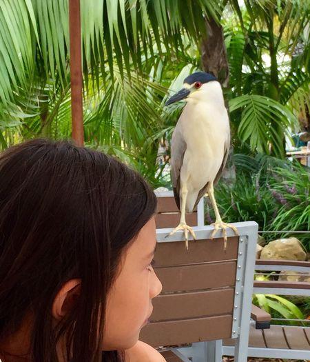 You blinked first! Santa Barbara Zoo Exotic Birds Staring At Me Staring Contest Little Girl Nature_collection Girl And Birds Santa Barbara, CA
