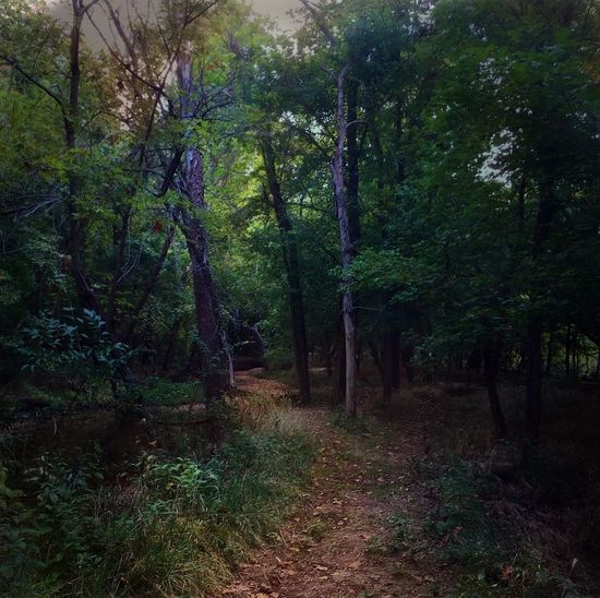 Landscape, Springfield Missouri, Springfield Nature Center iPhone 6, Filterstorm nuve, snapseed, Mextures