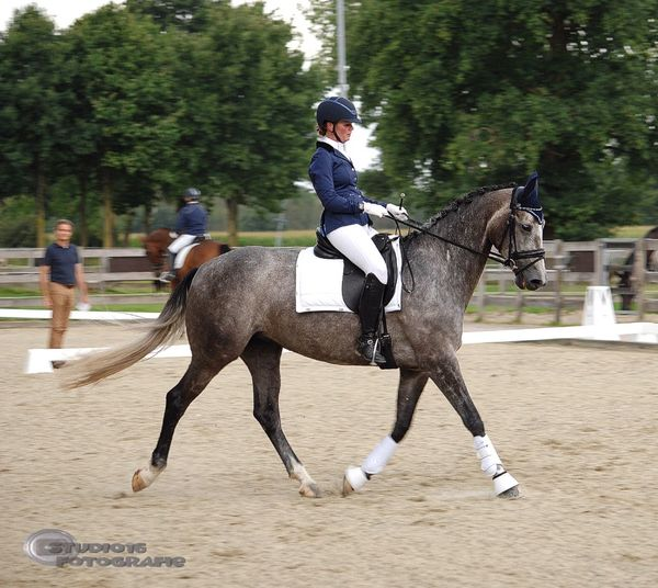 Dressage Competition Competition Competitive Sport Day Domestic Animals Equestrianphotography Focus On Foreground Full Length Headwear Horse Horseback Riding Jockey Lifestyles Livestock Mammal Men Nature One Person Outdoors People Real People Riding Sport Tree