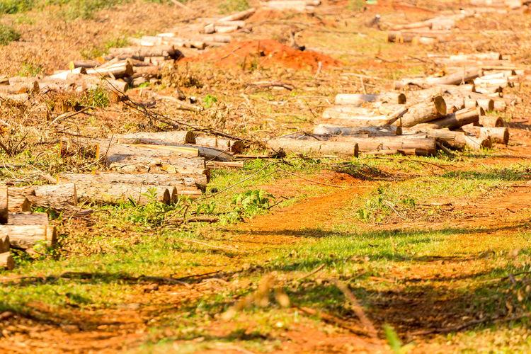 Old ruin on field
