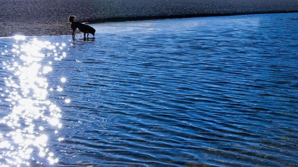 Holy Lake Namtsolake Namtso Animal Themes Pets Domestic Animals Water One Animal Nature Rippled Mammal Outdoors Sea Blue Day Beauty In Nature No People Tibet Tibet Travel Tibet Life EyeEmNewHere EyeEmNewHere