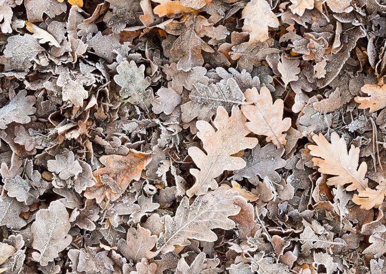 Full frame shot of dry leaves on field during winter