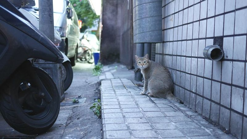 Taking Photos Cat Stray Cat Cute Cats