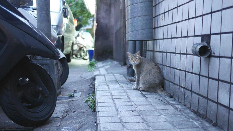 Taking Photos Cat Stray Cat Cute Cats