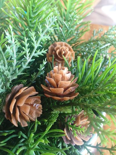 Pine Cones Plastic Tree Decoration Close-up Indoors  Nature Plant Freshness No People Cafe First Eyeem Photo