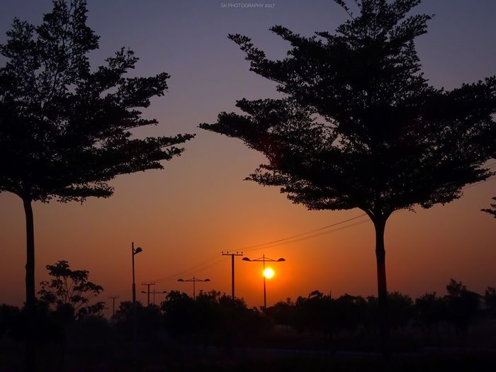 Sunrise Nature Tree Silhouette Sky Travel Travel Destinations Vacations Beauty In Nature Scenics No People Outdoors Landscape Growth Plant Sony Full Frame SonyHX400V Daily Life Day Beauty In Nature Nature Yellow Tree Sun